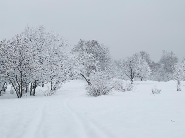 2007-Зима в парке 2